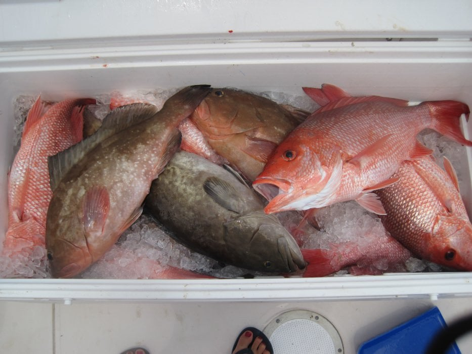 red snapper catch turks and caicos