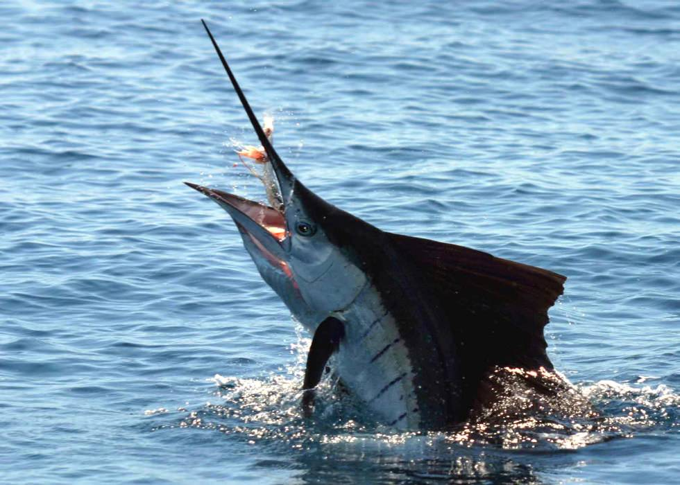 fishing sailfish turks and caicos