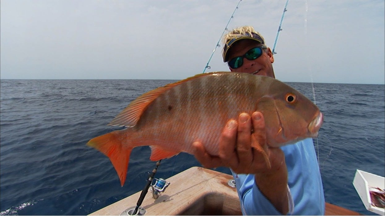 fishing mountain snapper